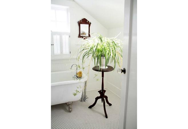 5 indoor plants (3)