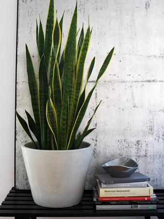 5 indoor plants (4)