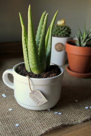 5 indoor plants (5)