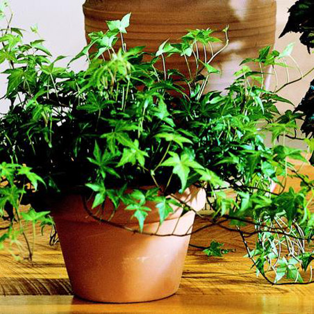5 indoor plants (6)