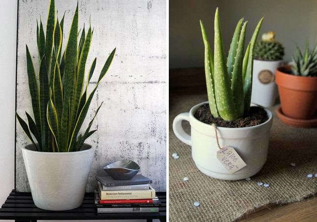 5-indoor-plants-cover