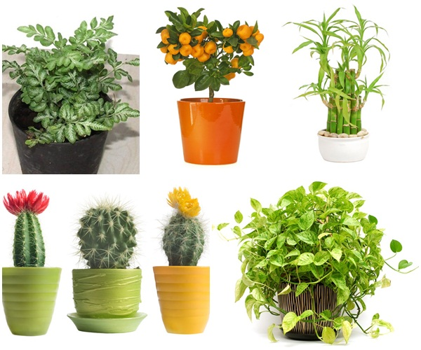 5-plants-for-working-space (1)