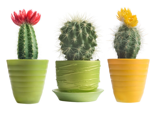 5-plants-for-working-space (2)