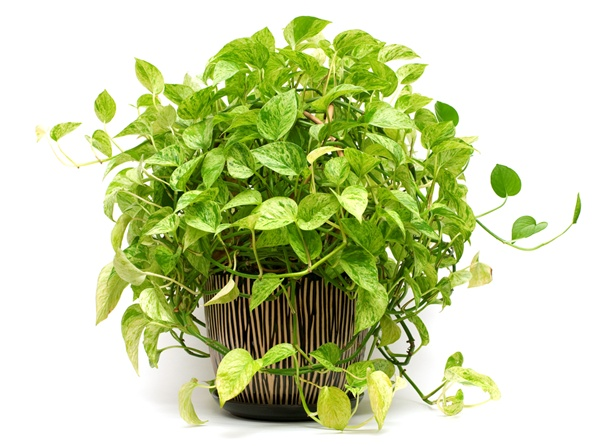 5-plants-for-working-space (3)
