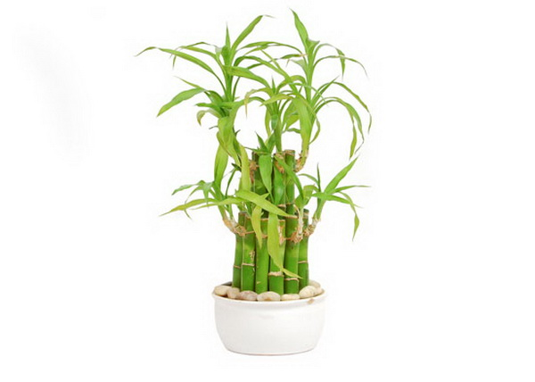 5-plants-for-working-space (5)