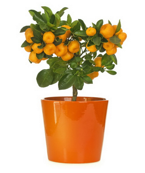 5-plants-for-working-space (6)