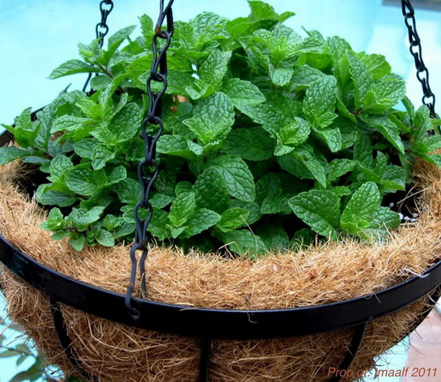 6 steps to grow home veggie garden (1)