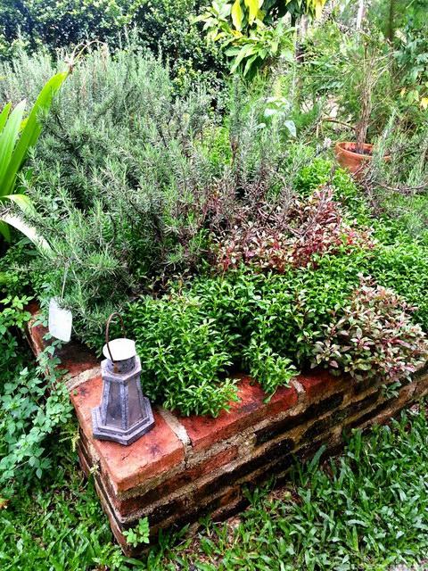 6 steps to grow home veggie garden (2)