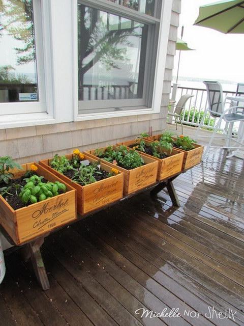 6 steps to grow home veggie garden (3)