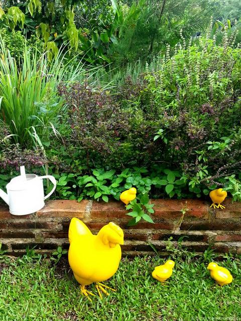 6 steps to grow home veggie garden (4)