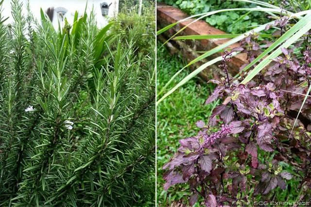 6 steps to grow home veggie garden (6)