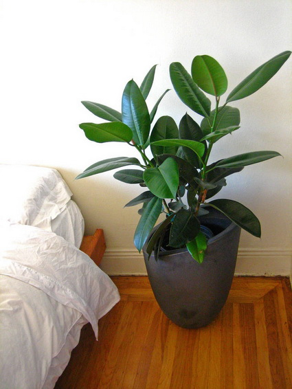 8 Ideas for interior plants (3)