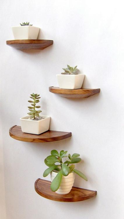 8 Ideas for interior plants (6)