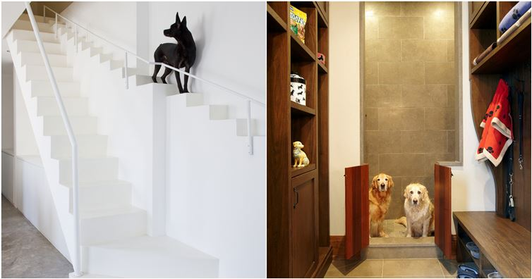 8 interior ideas for dog lover (1)