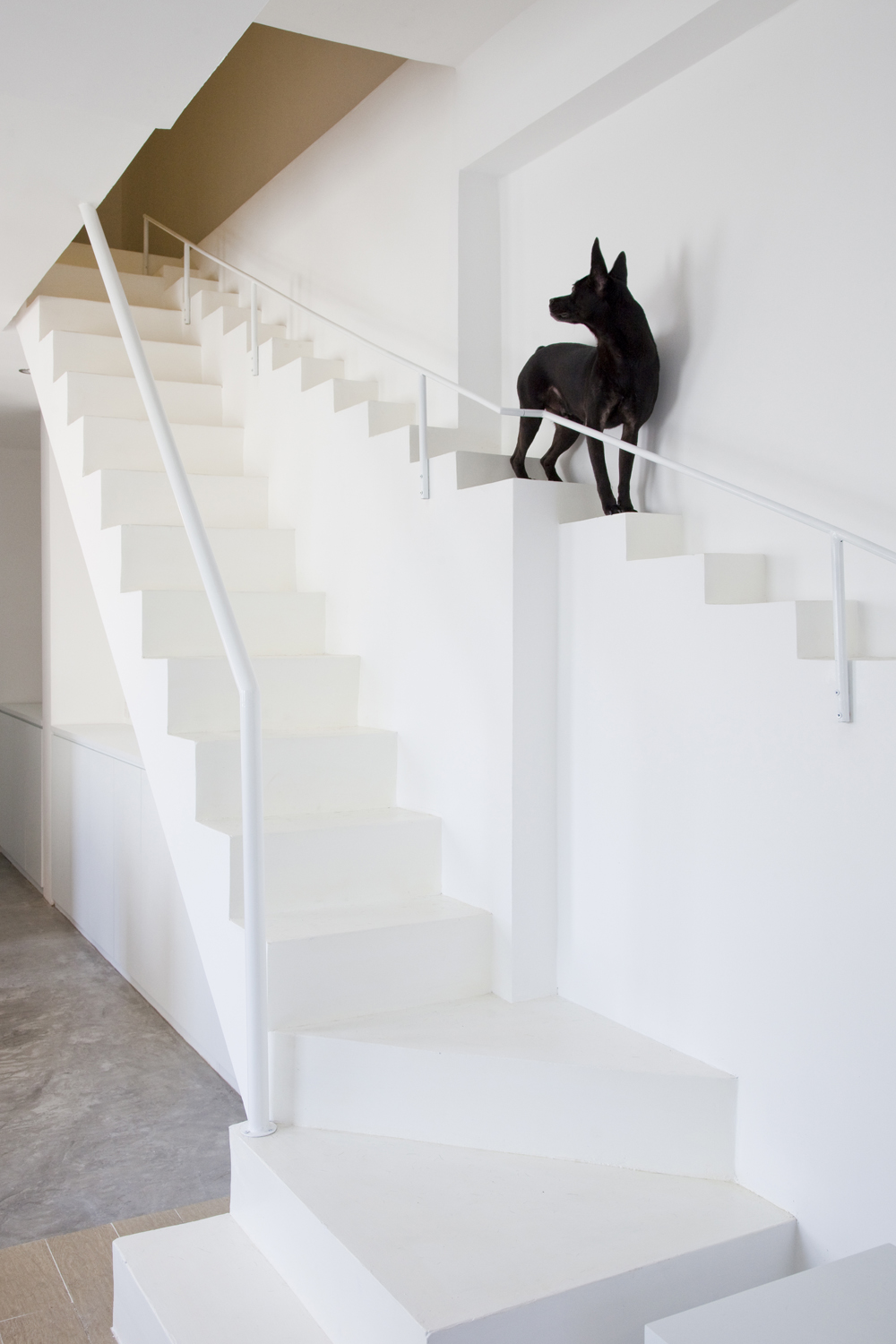 8 interior ideas for dog lover (3)