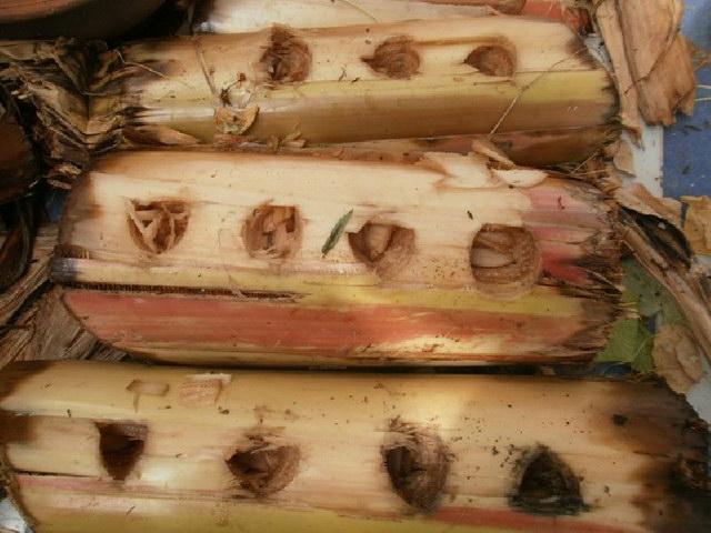 grow-plant-in-banana-tree-diy (1)