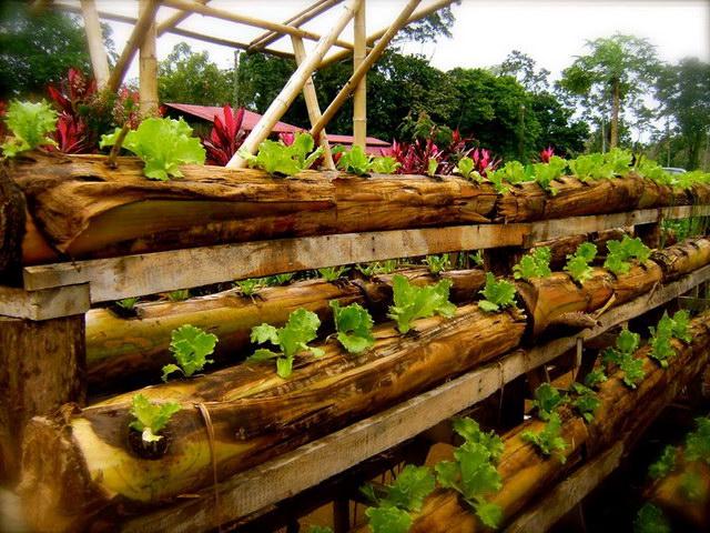 grow-plant-in-banana-tree-diy (4)