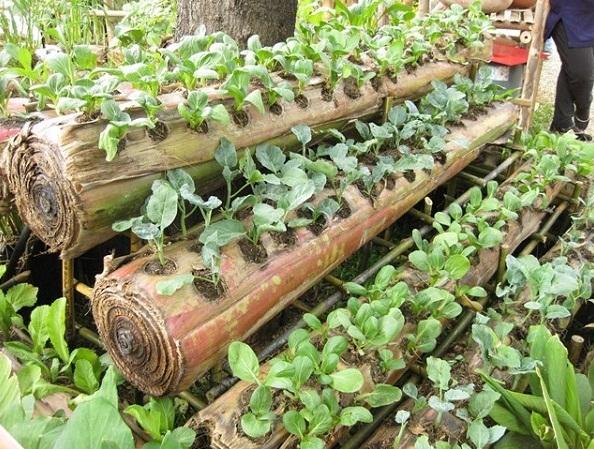 grow-plant-in-banana-tree-diy