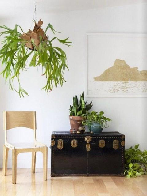 hanging-staghorns-and-elkhorns-decor