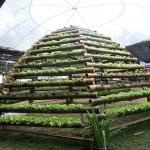 """สุดยอดไอเดีย!! ปลูกพืชไร้ดินแบบใหม่ ใช้ """"กระบอกไม้ไผ่"""" แทนท่อพีวีซี"""