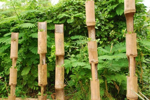 how to growing plants in bamboo (2)
