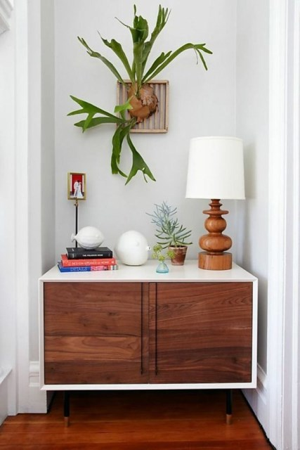 indoor-staghorn-fern-decor-ideas