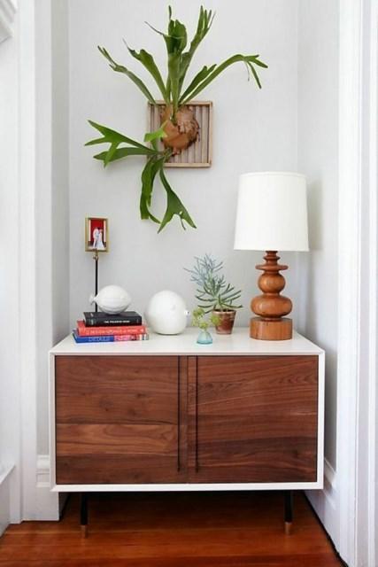 indoor-staghorn-fern-decor-ideas