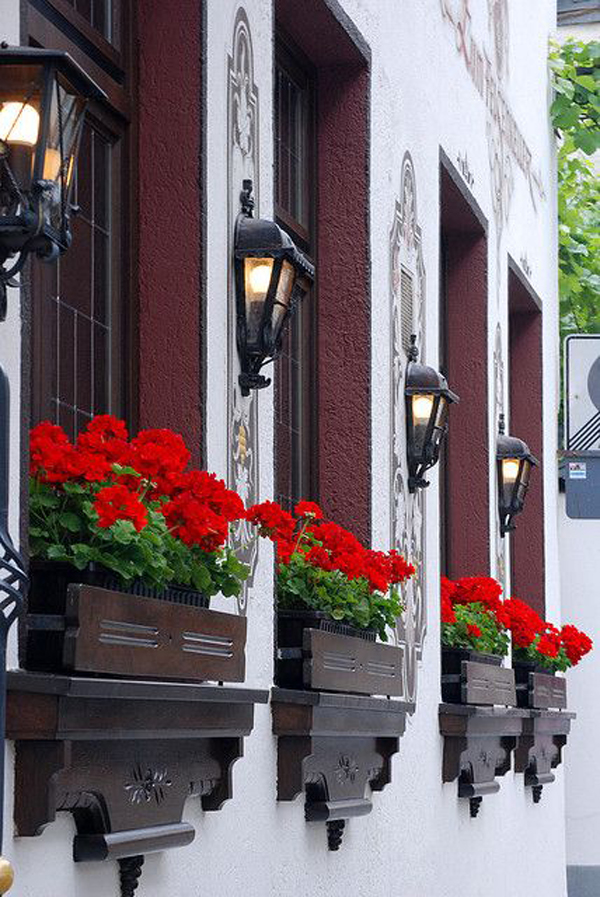 red-geraniums-window-boxes