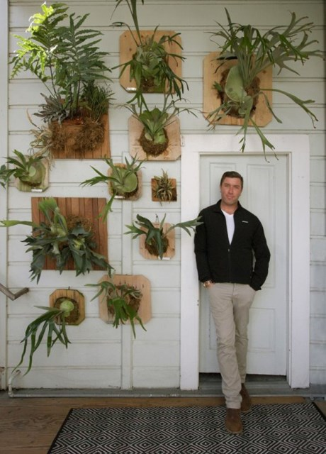 staghorn-fern-for-your-wall-decoration