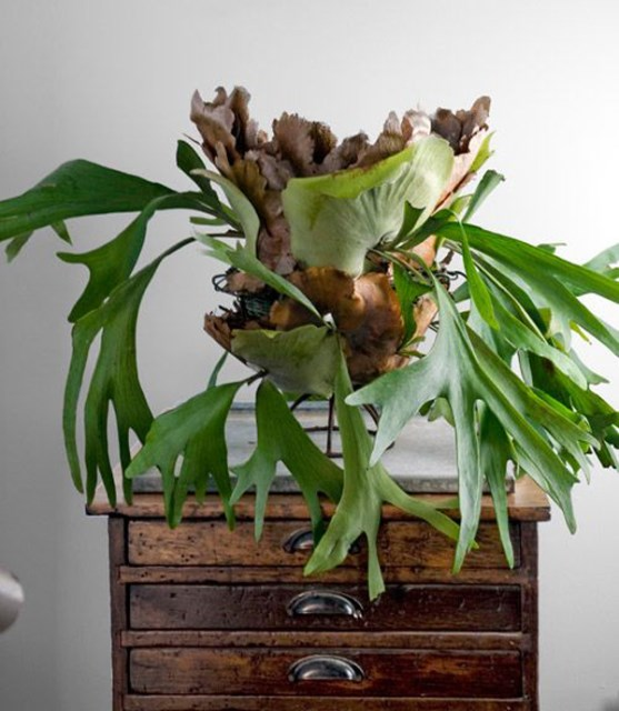 staghorn-fern-in-table-top-centerpiece