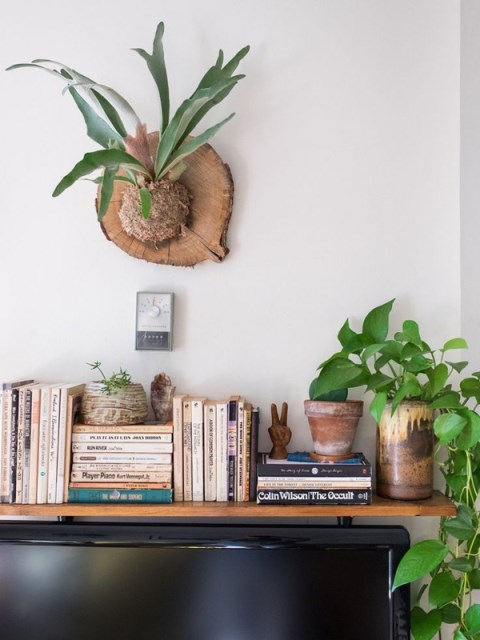 stoghorn-fern-in-bookcase-decor