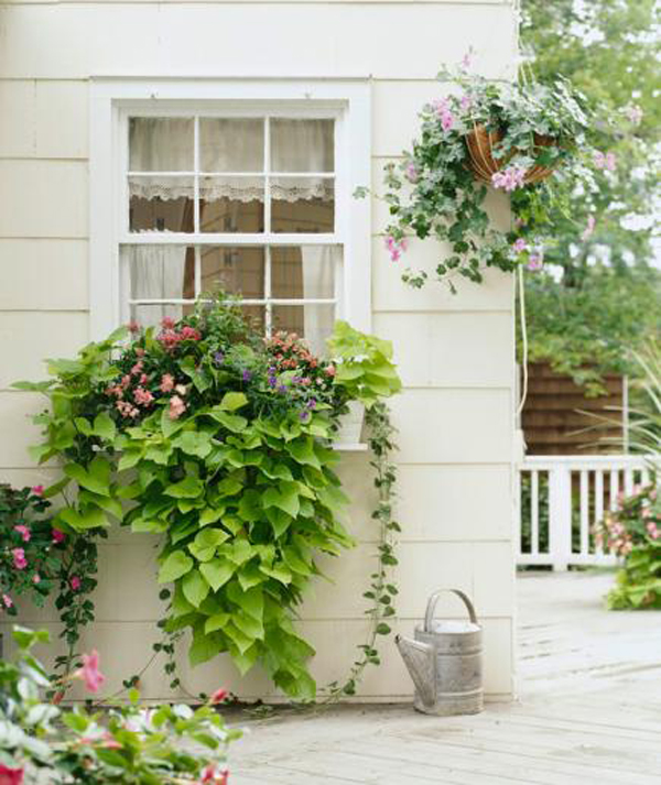 untamed-growth-window-boxes