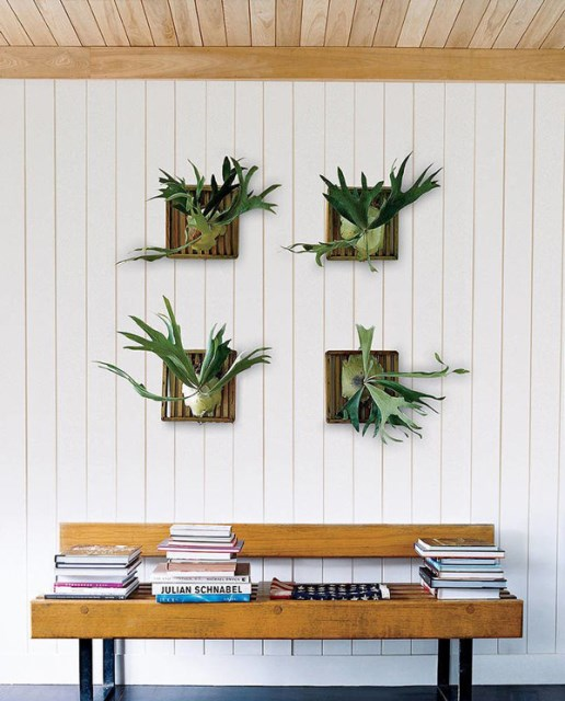 wall-hanging-staghorn-fern-decorations