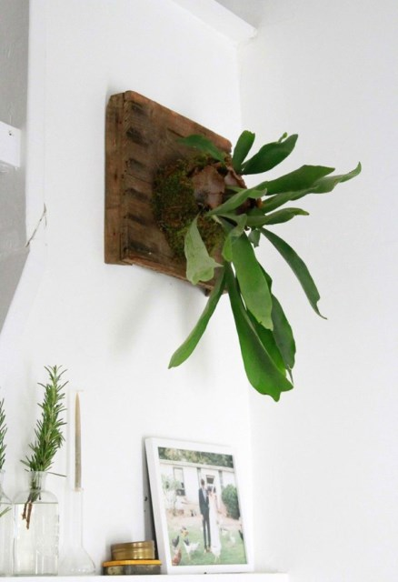 wall-hanging-staghorn-planter-decor