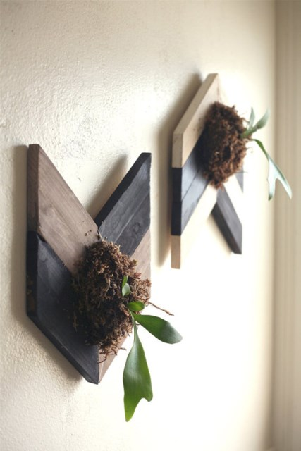 wall-mounted-staghorn-fern