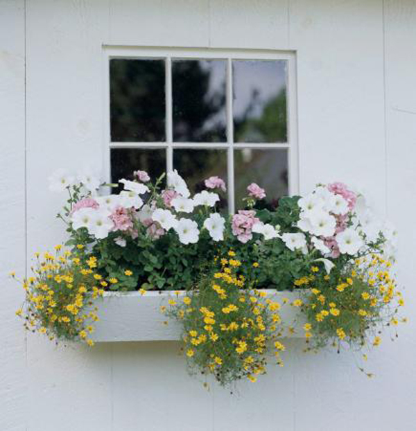 white-pink-and-yellow-window-boxes