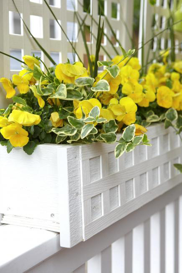 yellow-window-boxes-decoration