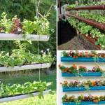 """12 ไอเดียสร้างสรรค์ """"ปลูกพืชในท่อ PVC"""" ไอเดียเก๋ๆ เพื่อสวนสวยของเรา"""