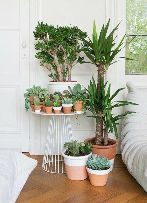12-mezmerizing-indoor-garden-ideas (4)
