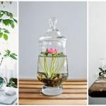 15 ไอเดียจัดสวนเทอราเรียม ด้วยพืชน้ำ ย่อโลกธรรมชาติสวยงามไว้ภายในขวดโหล