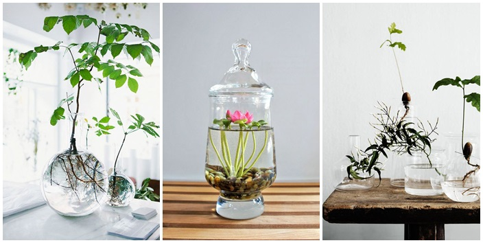 15 ideas diy terrarium water garden (1)