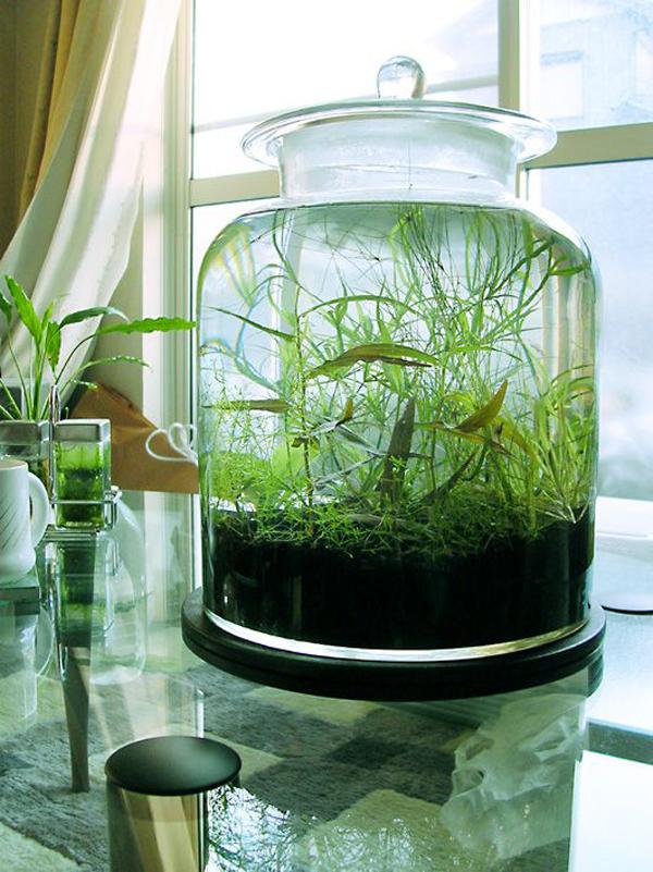 15 ideas diy terrarium water garden (11)