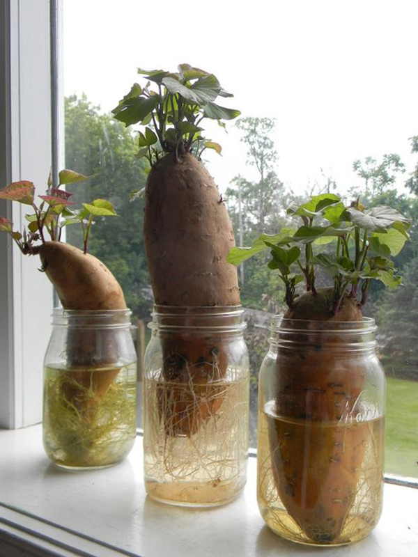 15 ideas diy terrarium water garden (16)