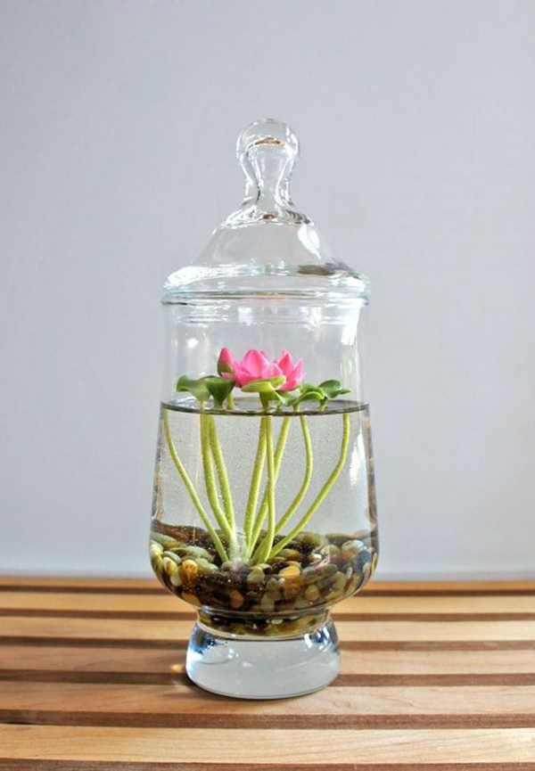 15 ideas diy terrarium water garden (2)