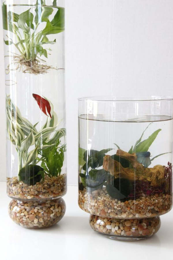 15 ideas diy terrarium water garden (5)