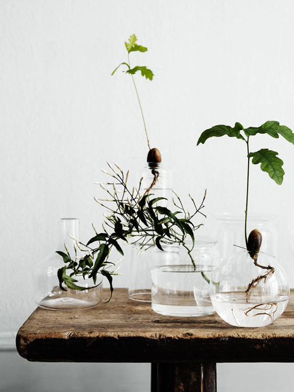 15 ideas diy terrarium water garden (6)