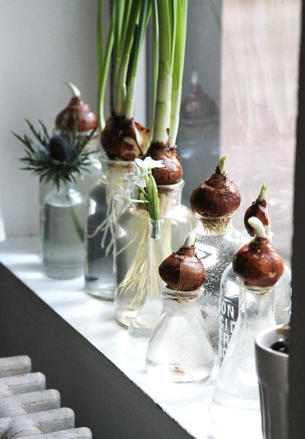 15 ideas diy terrarium water garden (7)