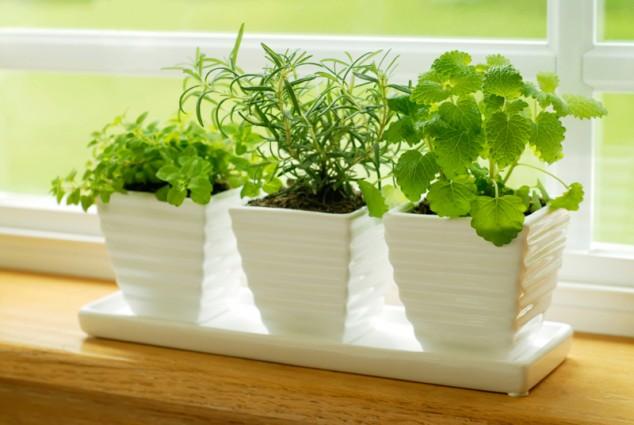 15-miniature-indoor-gardens (1)