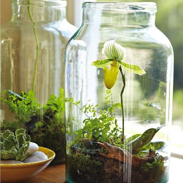 15-miniature-indoor-gardens (12)
