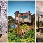 """สุดยอด 20 ไอเดีย """"บ้านต้นไม้"""" สร้างสรรค์พื้นที่พักผ่อนสุดน่าอยู่ และแปลกตา"""